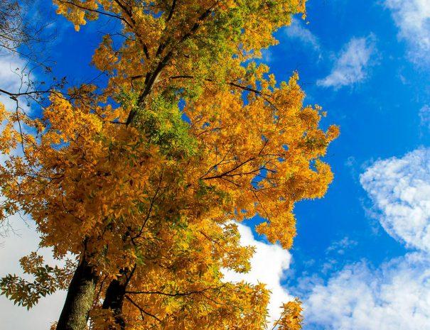 Fall Treetops at Stillwater Haven